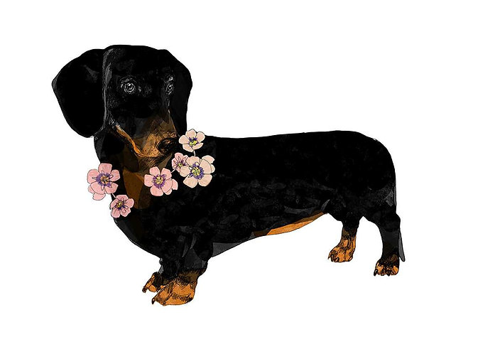 sausage dog print with flowers