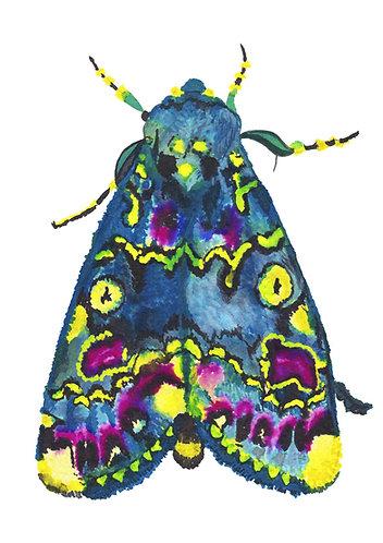 Indian Iily moth