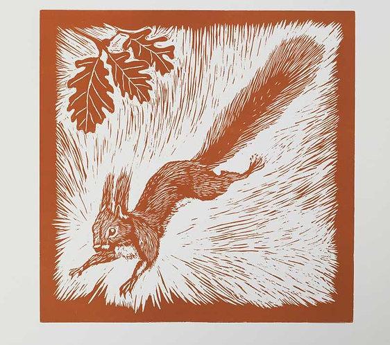 squirrel art print for children's rooms