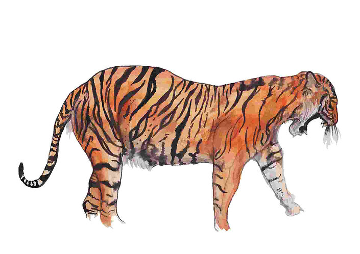 Tiger print for kids rooms