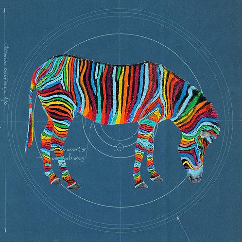 Zebra 2 on Blueprint by Raph Thomas