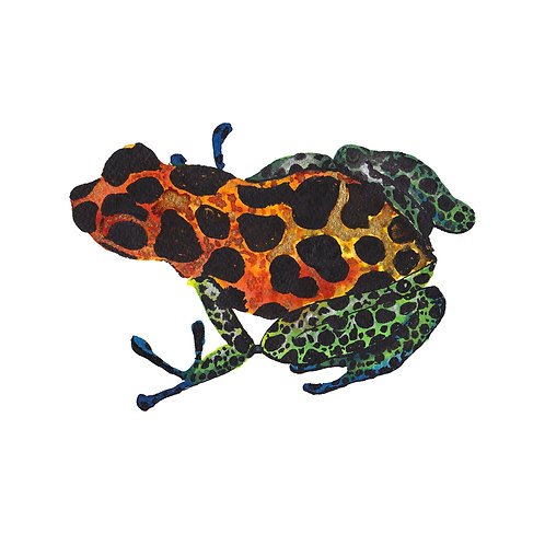 Poison dart frog print