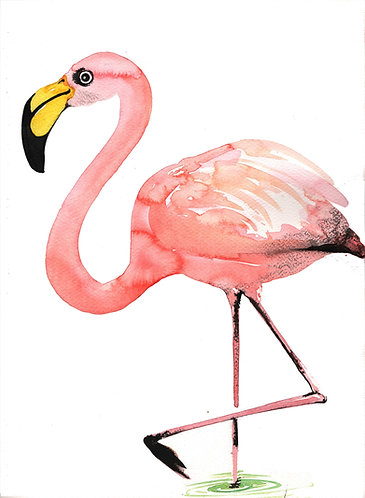 Flamingo by Nick Anaam