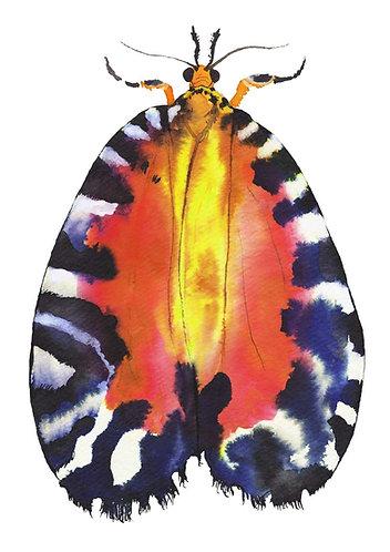 Colourful moth art print