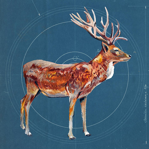 Stag on Blueprint by Raph Thomas