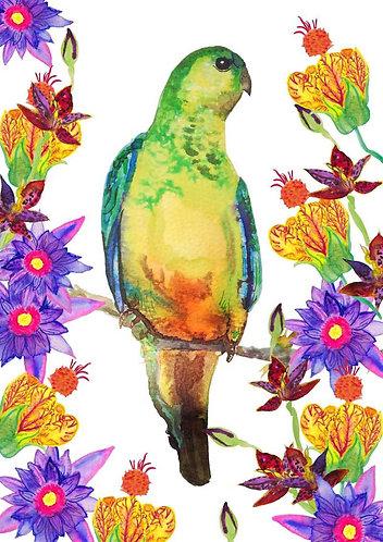 Tropical parrot print