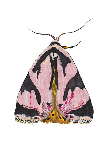 Colourful moth print