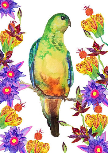 Tropical Parrot by Cecilia Washburn