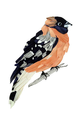 Finch by Jaybird Illustration