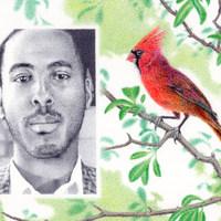 Coleman + Cardinal
