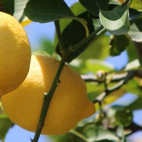 Binnenkort weer vers fruit en groente van Le Galline Felici