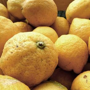 Citrus fruit - proeverij