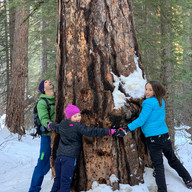 Now that's a big tree by Heidi Korven