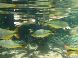peixes05
