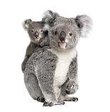 Portrait of Koala bears, 4 years old and