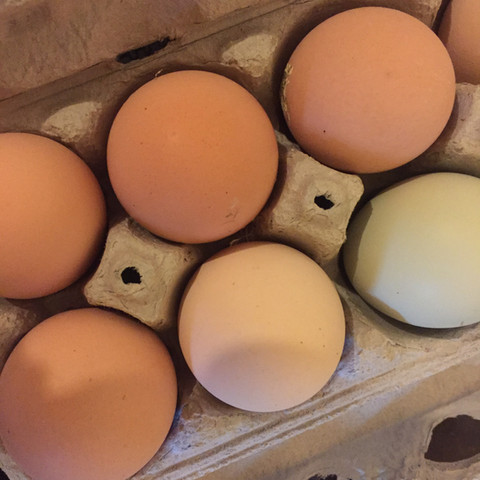 Willow Bend Produce farm eggs