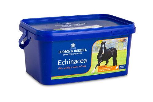 Dodson & Horrell,Echinacea