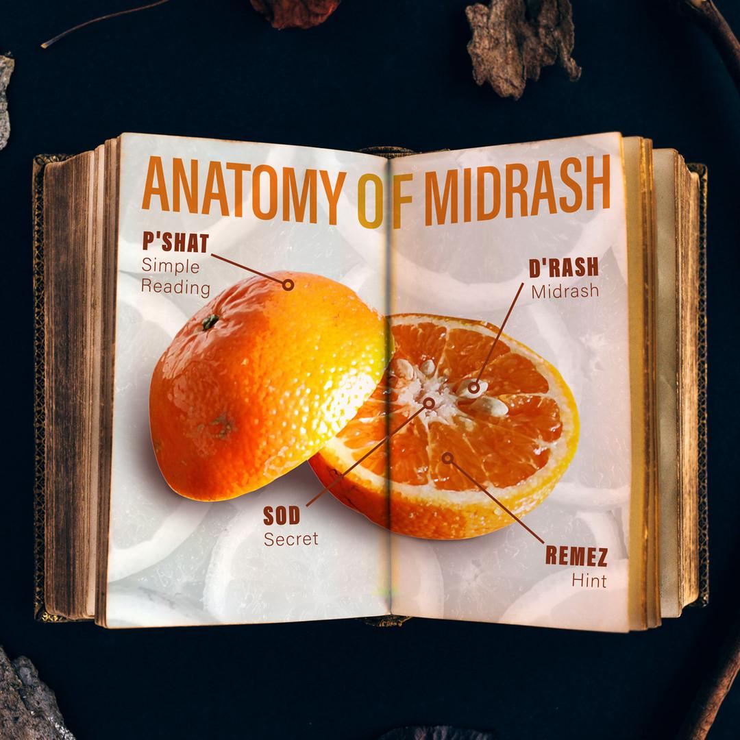 Anatomy-of-Midrash_square_04.jpg