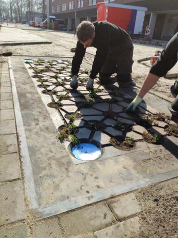 Beplanting aangebracht in aquaParkers Hengelo