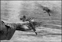 Bird Feeder, Paris
