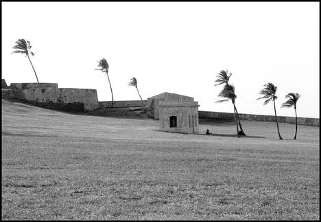 Palm Tree, Puerto Rico