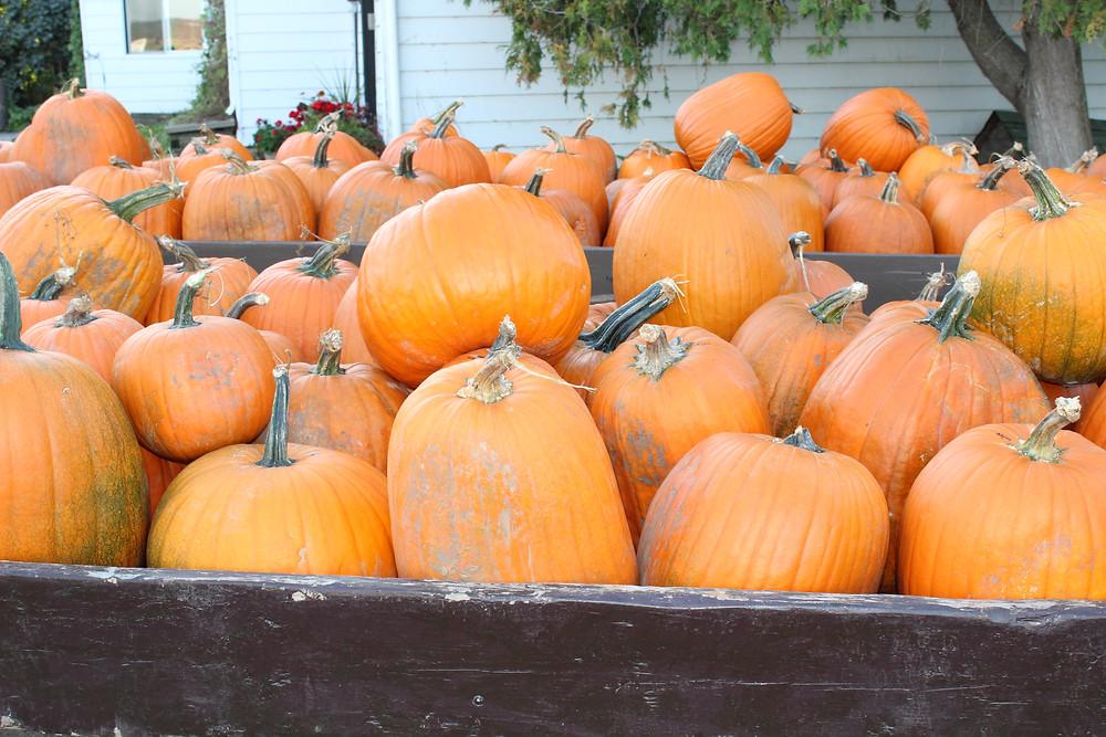 Chappell Farms Pumpkins