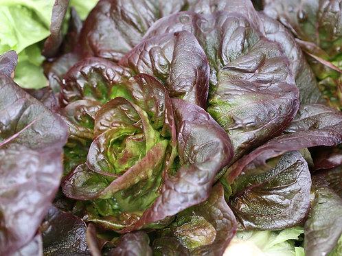 Salade Rougette / Pièce