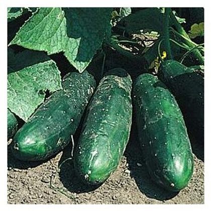 Concombre / Pièce