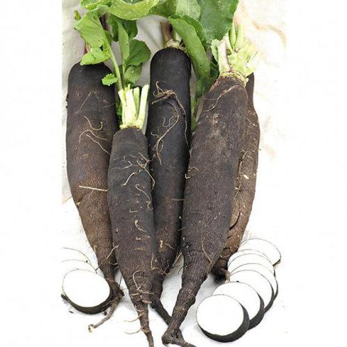 Radis Noir long / 1 Kg