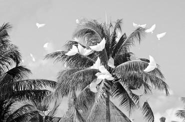 White bird kites