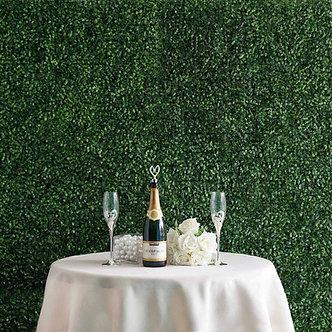 Boxwood Green Wall - 10' x 10'
