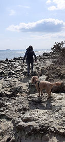Explore the Isle of Wight with your dog