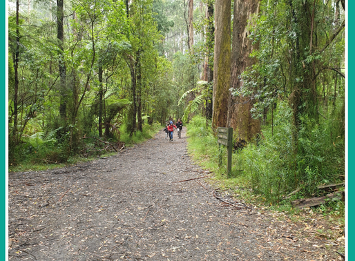 Did you know that bush walking is great for gut health?
