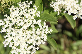blossom-5245984_1920.jpg