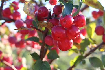 S Pixabay De Photos Ahorn Ahornbaum Natur Baum Bl C3 A4tter 3757640
