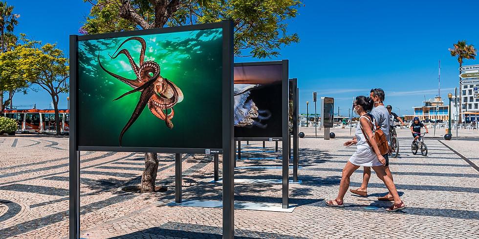 """Exposição """"ASul Profundo"""" de João Rodrigues"""