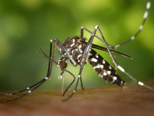 🥇 5 curiosidades sobre a dengue