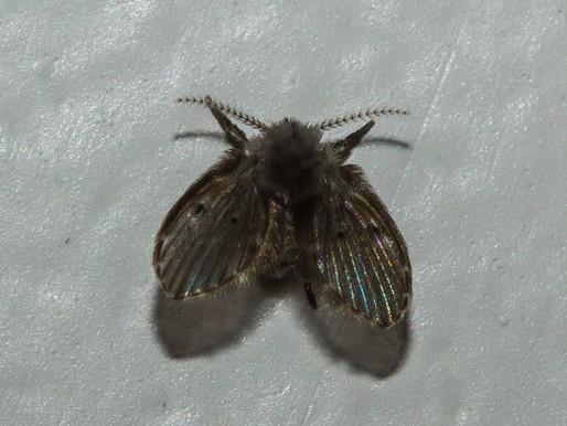 🥇 Mosquitos do banheiro: como acabar com eles?