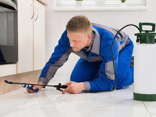 🥇 Dedetizando o apartamento: cuidados e métodos