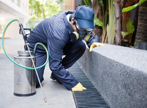 🥇 Cuidados com a higiene podem evitar a infestação de insetos
