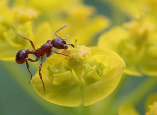 🥇 Formigas podem transmitir mais doenças que baratas