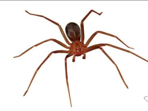 🥇 Primeiros socorros para picada de aranha?
