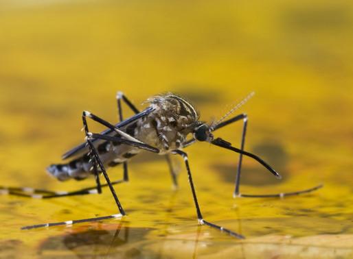 🥇 Prevenção contra a dengue