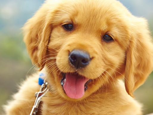🥇 Dedetização e animais domésticos: quais os cuidados?