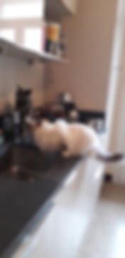 Mitzi et Babou en train de boire.jpg