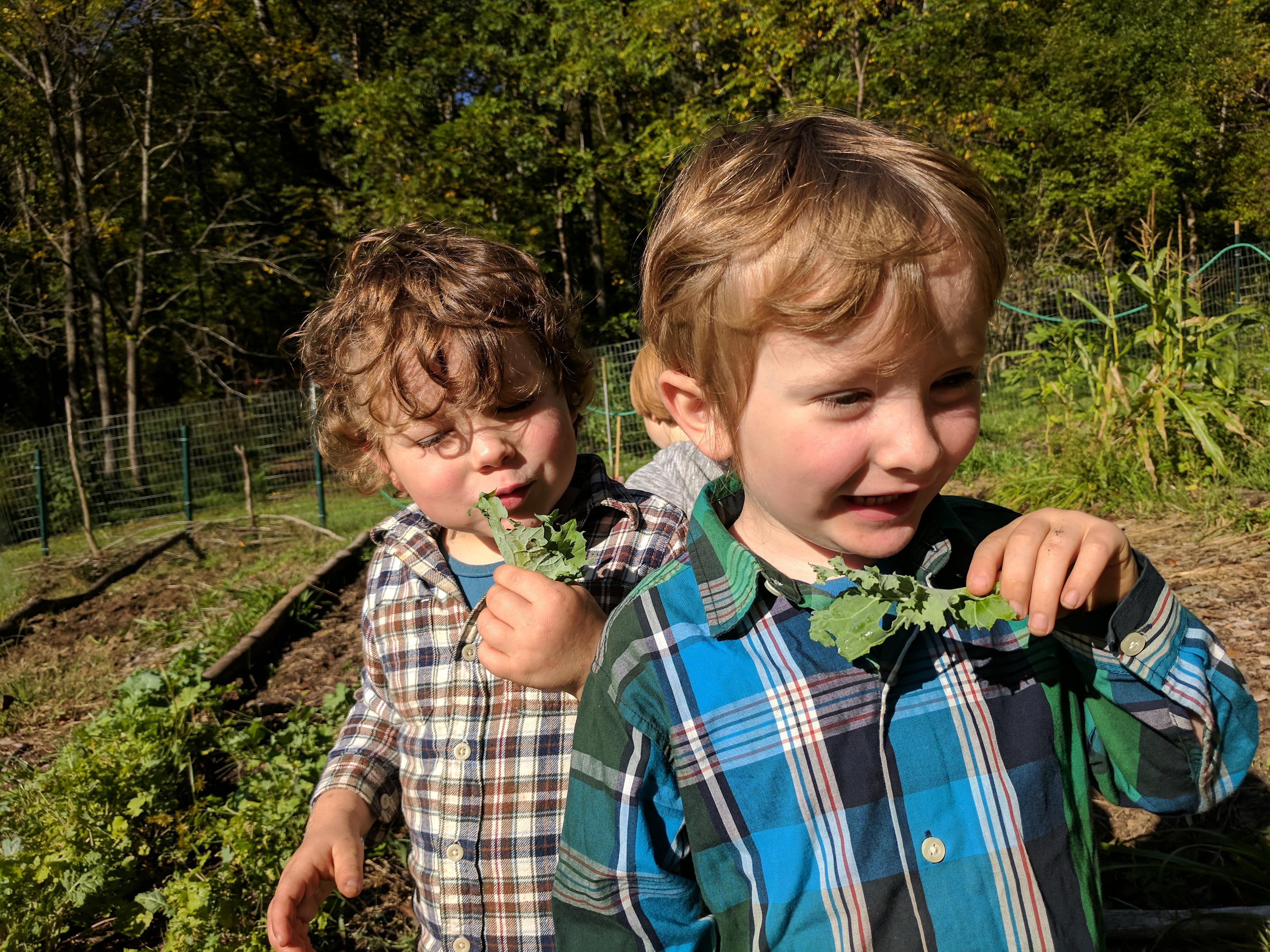 Ashevillefarmstead-kids-sprouts-garden