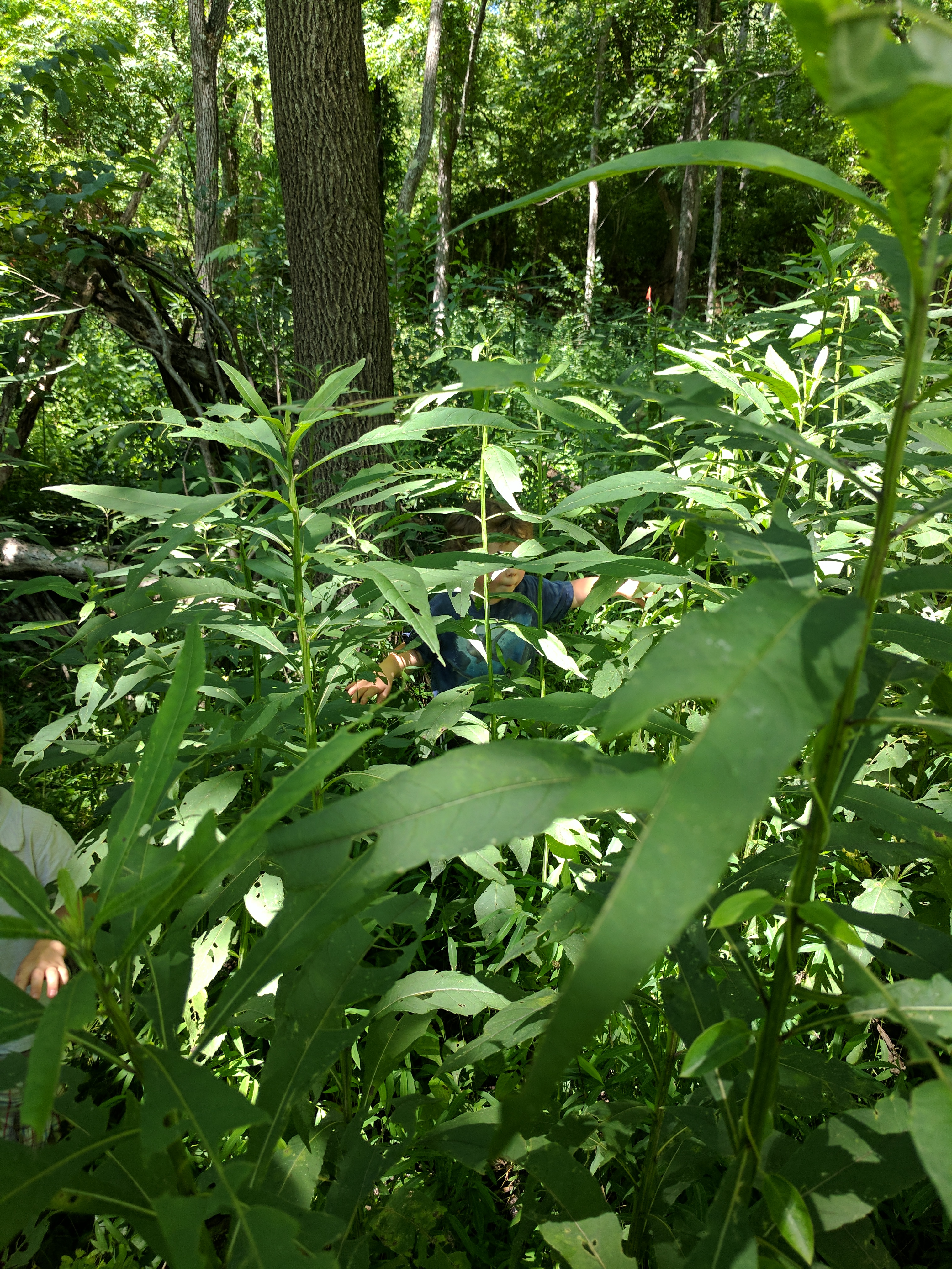 Asheville-farmstead-kids-forest-camoflauge