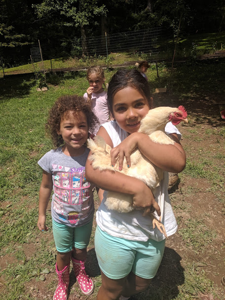 ashevillefarmstead-chickens-campfarmstead-nature-smiles