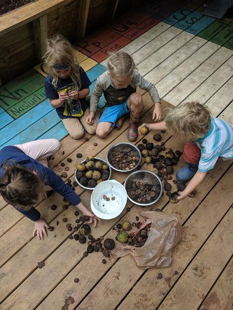 ashevillefarmstead-littlestlearners-walnut-nature-outdoorlearning-native