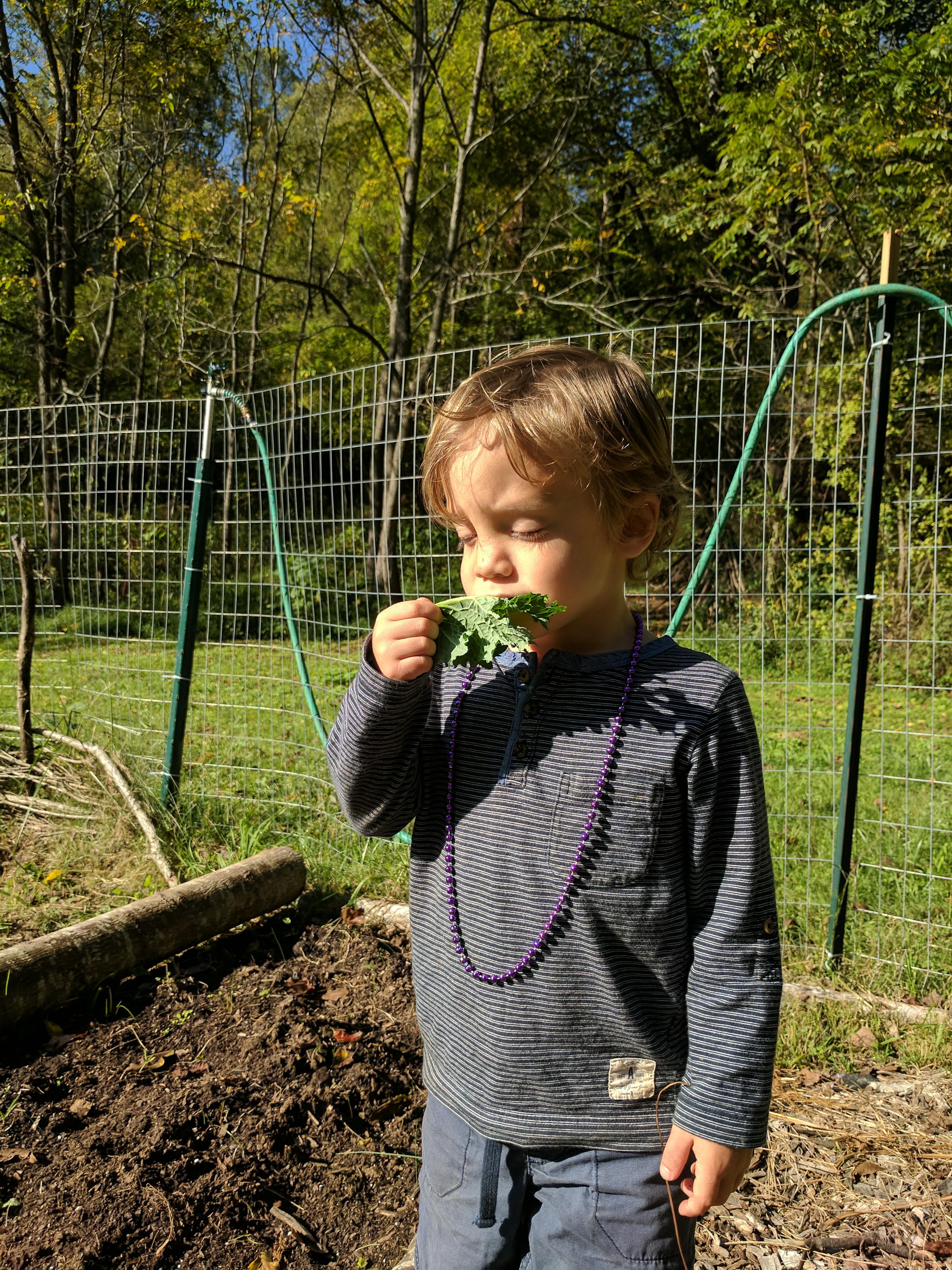 Ashevillefarmstead-kids-garden-kale-sprouts